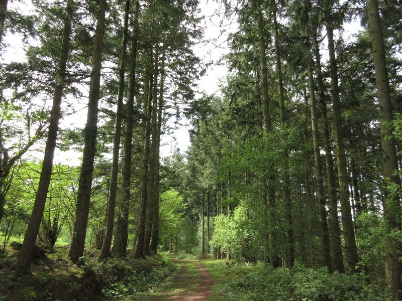 Land Commercial for sale in Woodland known a Coed Tylecrwn 50.66 acres at Llanfilo near Brecon, Powys