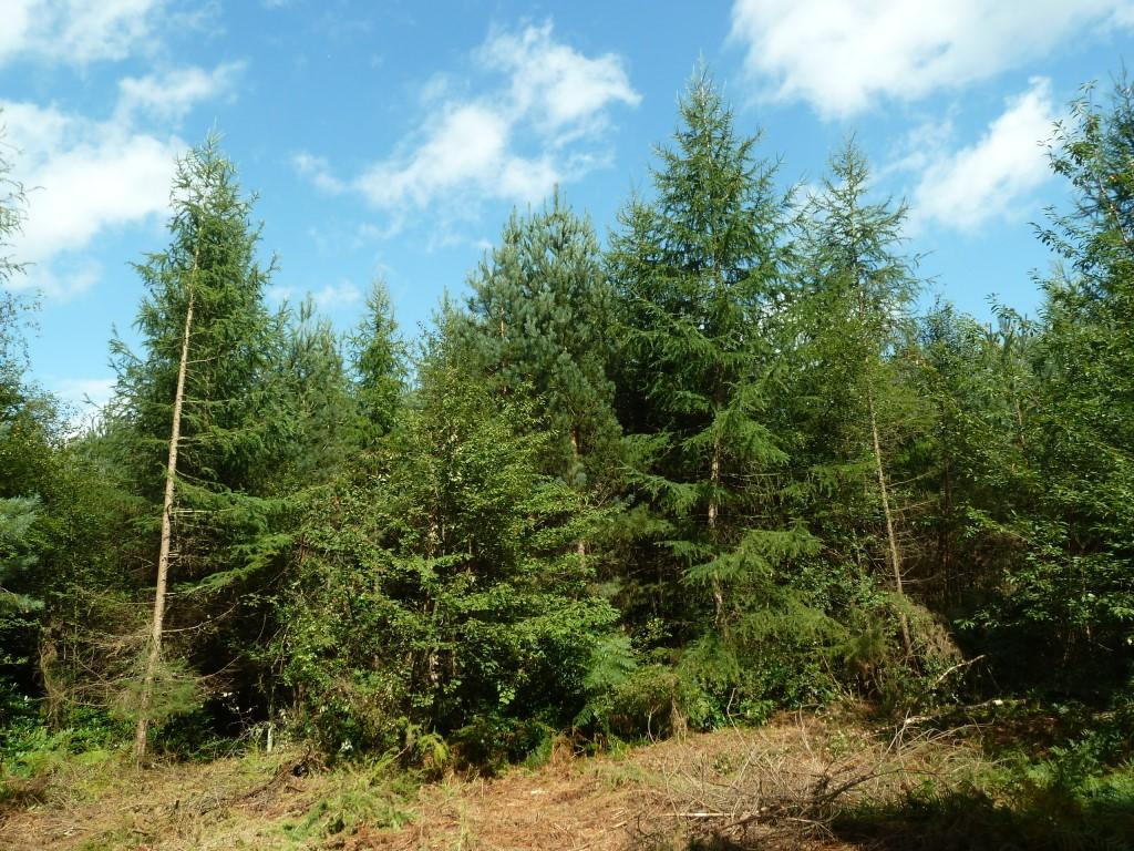Land Commercial for sale in The Henley Park Woodlands, Normandy, near Guildford, Surrey GU3