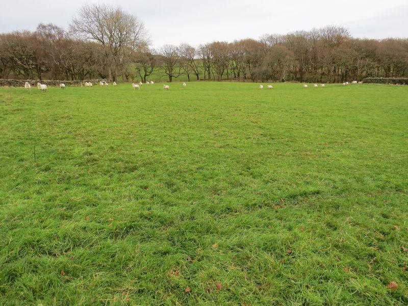 Land Commercial for sale in 151.344 acres of Upland Pasture, Woodland and Open Mountain, Fforest Farm Ty Twppa Farm Lands