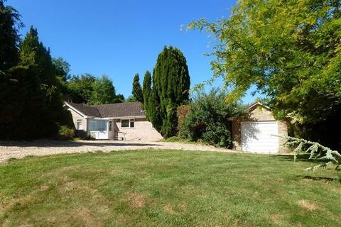 3 bedroom bungalow to rent - St Mary`s Close, Blandford