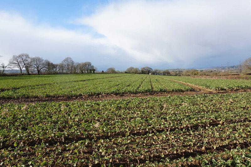 Land Commercial for sale in Land formerly part of Loxbrook Farm, Exeter