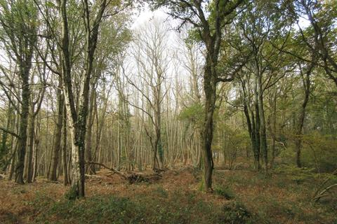 Land for sale - Luscombe, Dullar and Foxhole Woods, near Sturminster Marshall, Dorset BH21