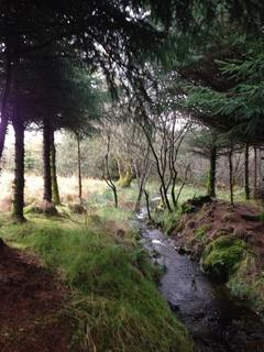 Land for sale - Land/Forest for sale in Aberystwyth, Wales