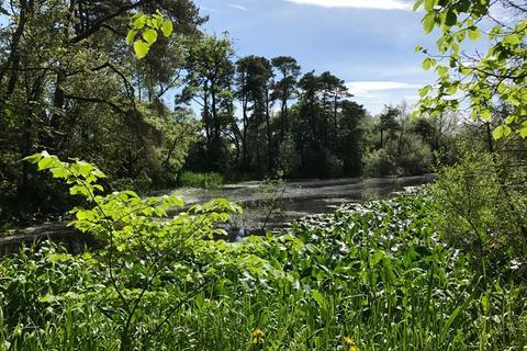 Land for sale - Lylestone Wood, Near Kilwinning, North Ayrshire KA24