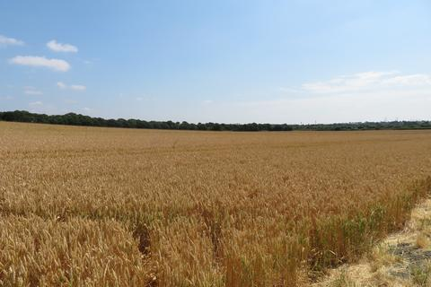 Farm land for sale - Stanford-le-Hope