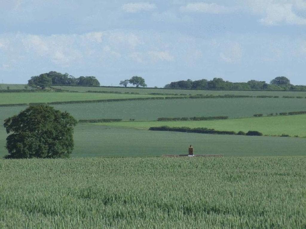 Wolds views