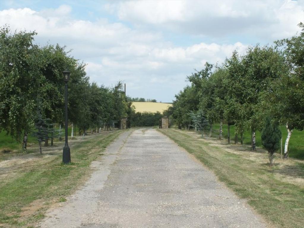 Tree line driveway
