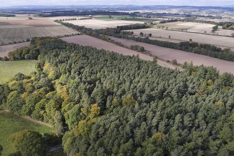 Farm for sale - Belmont Woodland: Lot 6, Newtyle, Blairgowrie, Perthshire