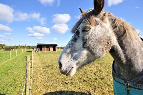 Equestrian facility for sale - Thuxton