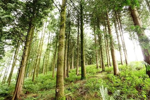 Land for sale - Middlecott Wood, Charles, near South Molton, Devon EX32