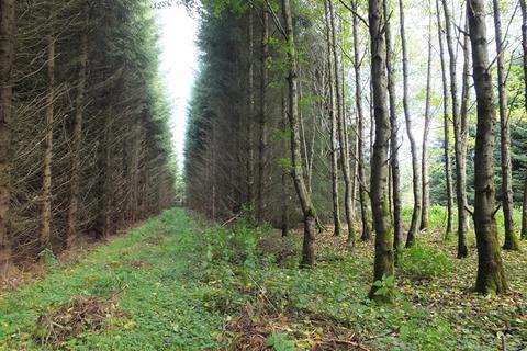 Land for sale - Finnygaud Woodland, Aberchirder, Aberdeenshire AB45