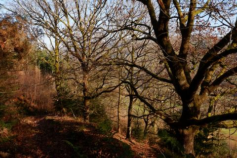 Land for sale - WOODLAND: Coed Nant-cyff, Aberangell, Machynlleth SY20 9ND