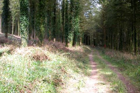 Land for sale - WOODLAND, Dumnonii Wood, Trelaske, Lewannick, Launceston PL15