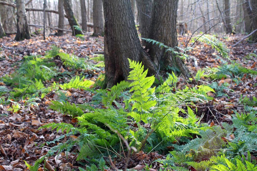 Ferns in the winter sun
