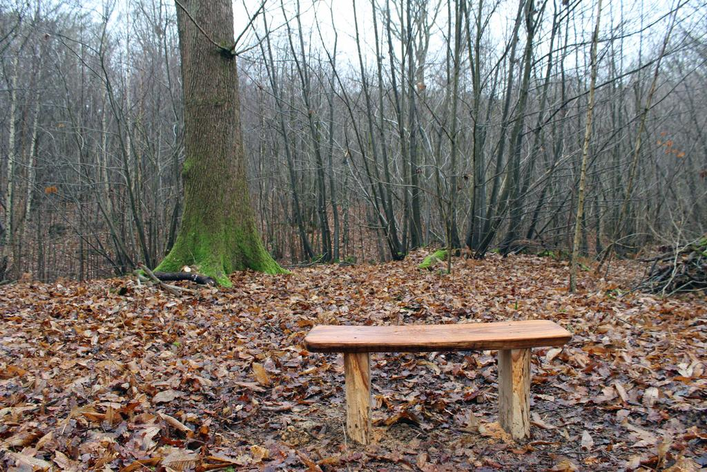 A place to sit and enjoy the tranquility