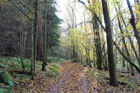 Land for sale - WOODLAND, Waggon Wood, Pembury, Kent, TN2