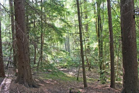 Land for sale - WOODLAND, Stage Wood, Pembury, Kent, TN2