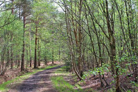 Land for sale - WOODLAND, Arrowsmith Wood, near Tunbridge Wells, East Sussex, TN3