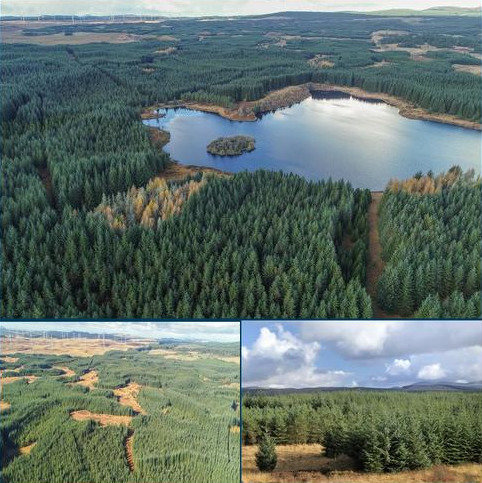 Land for sale - Eldrick Forest Estate, Barrhill, Girvan, South Ayrshire, KA26