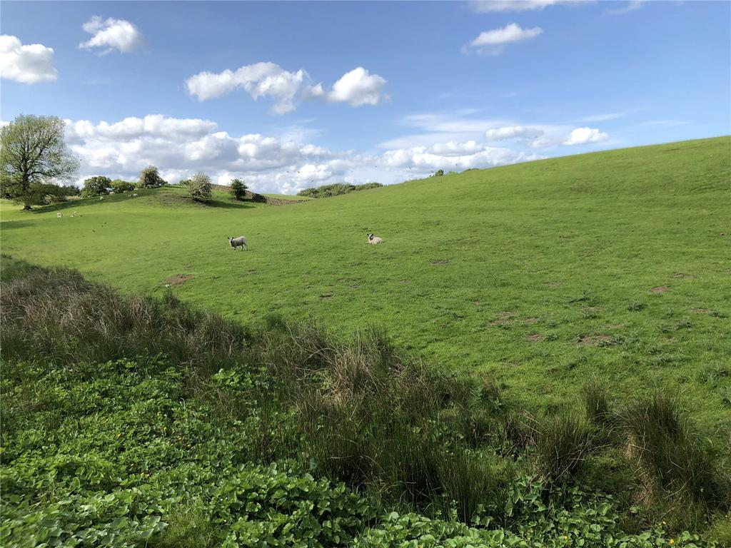 Lot 2   Pasture