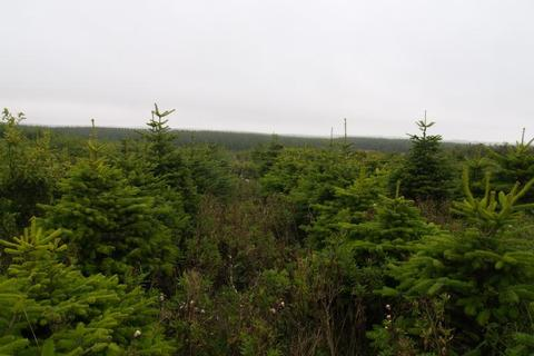 Land for sale - Christmas Tree & Mixed Species Wood, South Teuchan, Cruden Bay, Aberdeenshire, AB42
