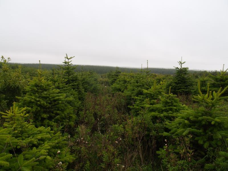 Land Commercial for sale in Christmas Tree Mixed Species Wood, South Teuchan, Cruden Bay, Aberdeenshire, AB42