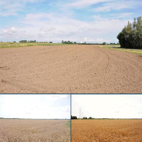Farm land for sale - Arable Land, Saddle Bow , King's Lynn  PE34