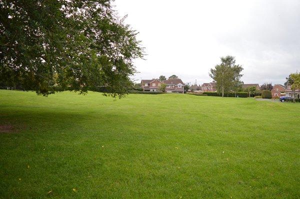 Open greenery