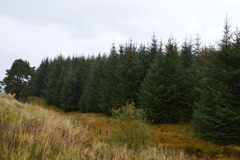 Land for sale - Poneil Woodland, Douglas, Lanark ML11