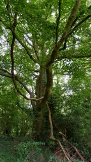 Woodland for sale - WOODLAND: Dinedor Wood, Near Hereford, Herefordshire HR2 6PD