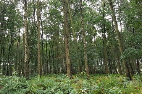 Land for sale - Hopton, Stafford