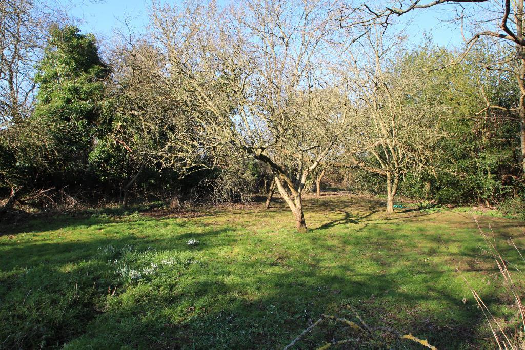 Woodland and orchard at rear of garden