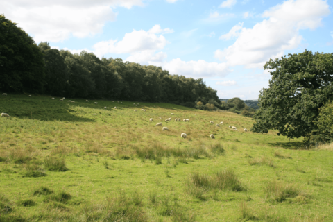Farm land for sale - Land North of St Johns Road, Unstone, Lot 1