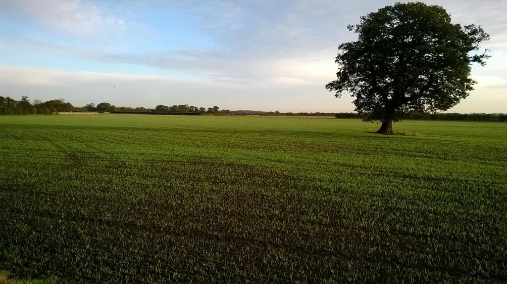 Land Commercial for sale in Atterwith Lane, Hessay, York