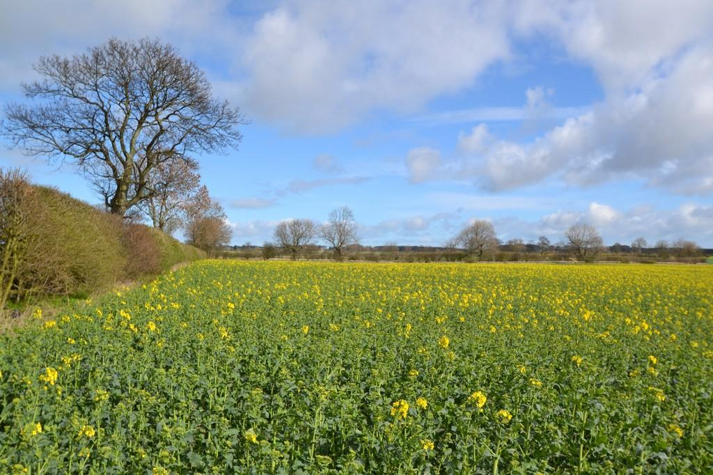 Land Commercial for sale in Land at North East Mason Farm, Dinnington