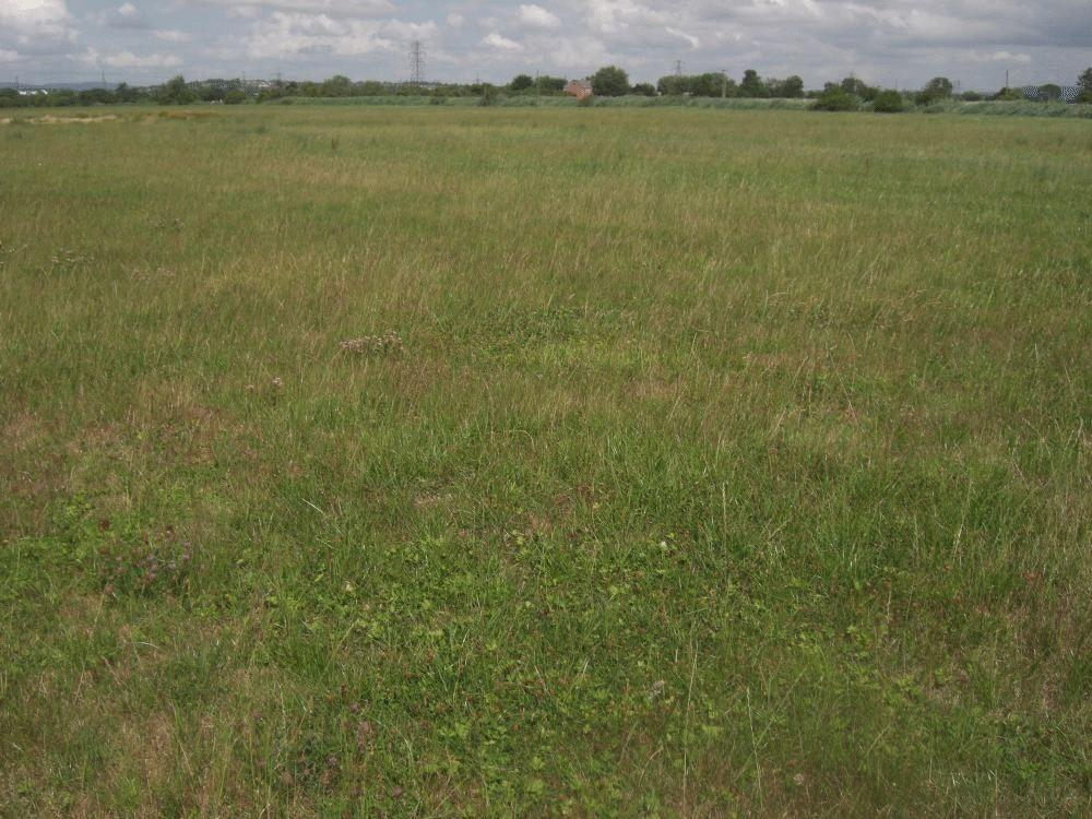 Farm Land Commercial for sale in 40 Acres (16 Ha), NP10