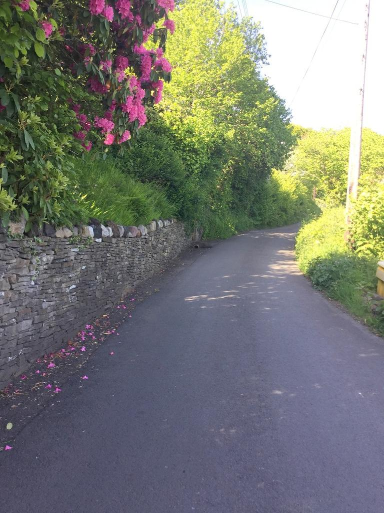 Road leading to property