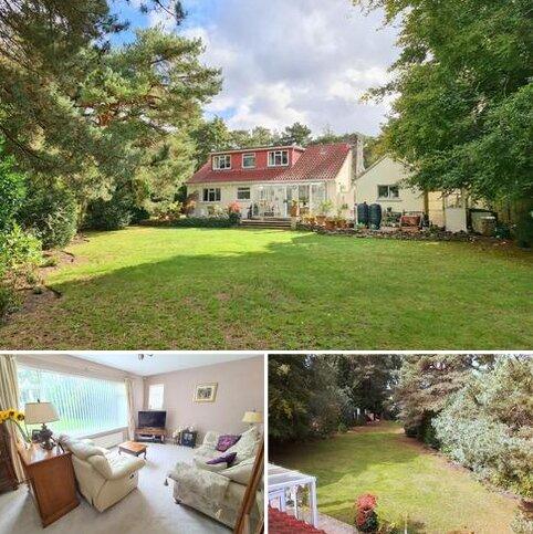 3 bedroom detached bungalow for sale - St Leonards, Ringwood, BH24 2QF