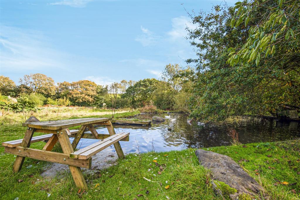Pond and paddock
