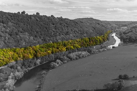 Land for sale - Woodland A466, Redbrook, NP25